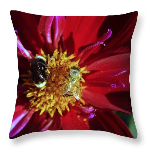 Life Throw Pillow featuring the photograph Two Different Bees Sharing by Jeff Swan