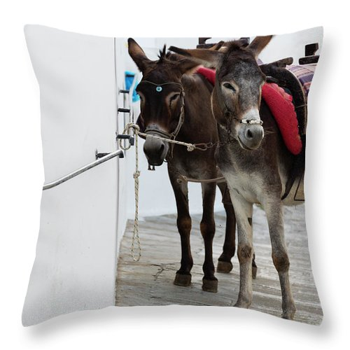 Working Animal Throw Pillow featuring the photograph Two Donkeys Tethered In The Street In by Martin Child