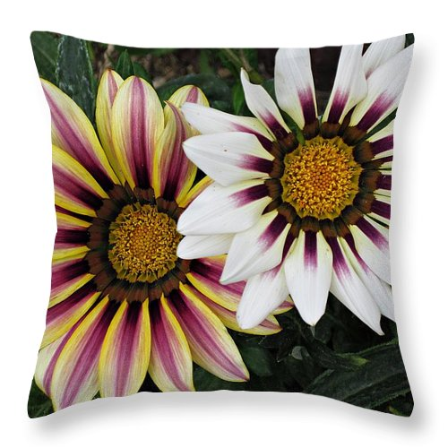 African Daisies Throw Pillow featuring the photograph Two Gazanias by MTBobbins Photography