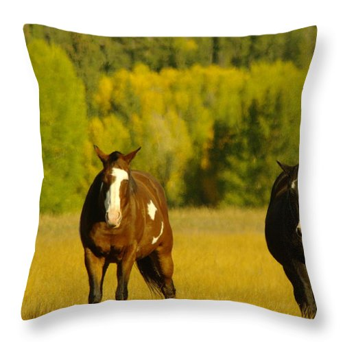 Four Legged Animals Throw Pillow featuring the photograph Two Horses Walking Along by Jeff Swan