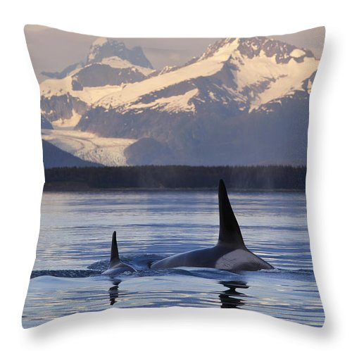 Group Throw Pillow featuring the photograph Two Killer Whales Surface In Lynn Canal by John Hyde