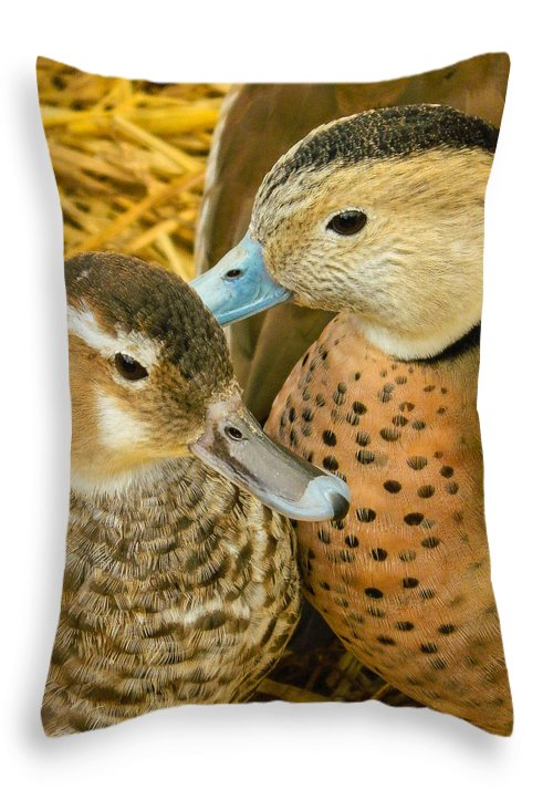 Wildlife Throw Pillow featuring the photograph Two Little Ducks by Mair Hunt
