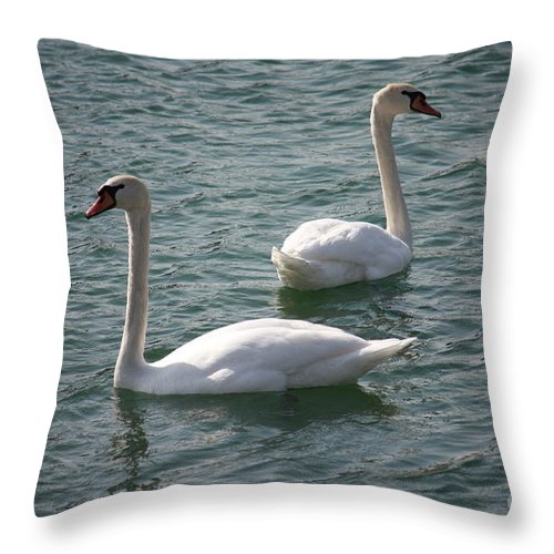 Nature Throw Pillow featuring the photograph Two Swans A Swimming by Brook Steed