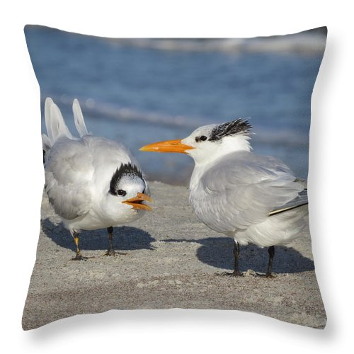 Birds. Birds Of Florida Throw Pillow featuring the photograph Two Terns Talking by Ellen Meakin