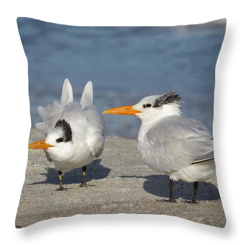 Birds. Birds Of Florida Throw Pillow featuring the photograph Two Terns Watching by Ellen Meakin