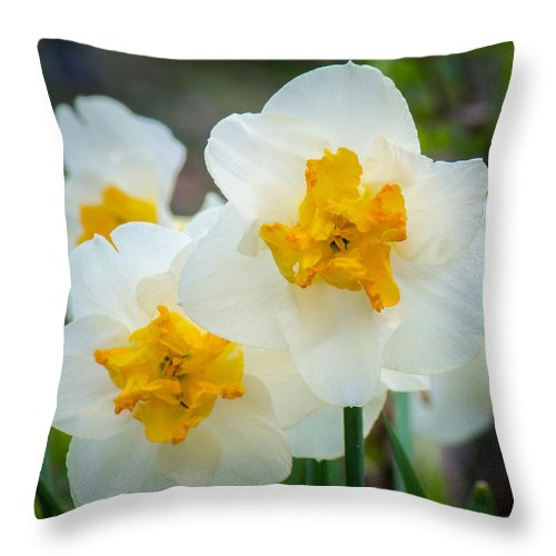 White Throw Pillow featuring the photograph Two-toned Daffodils by Bill Pevlor