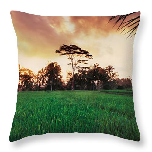 Rice Fields Throw Pillow featuring the photograph Ubud Rice Fields by Rod McLean