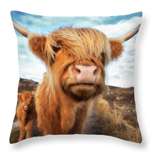Horned Throw Pillow featuring the photograph Uk, Scotland, Highland Cattle With Calf by Westend61