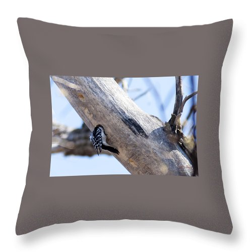 Spring Throw Pillow featuring the photograph Under Contruction by Edward Peterson