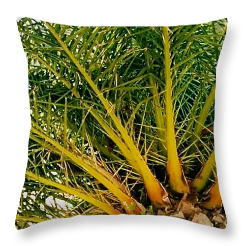 Palm Tree Throw Pillow featuring the photograph Under The Palm by Anita Lewis