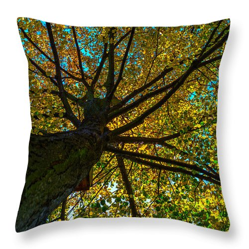 Under The Trees Skirt Throw Pillow featuring the photograph Under The Tree S Skirt by Tgchan