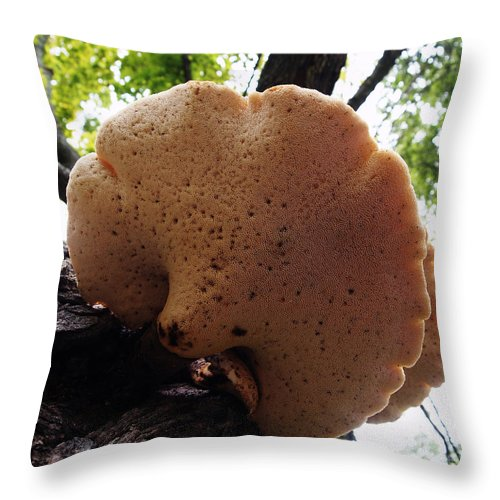 Tree Fungus Photos Throw Pillow featuring the photograph Underside Of Dryad's Saddle Fungus On Tree by Deborah Fay