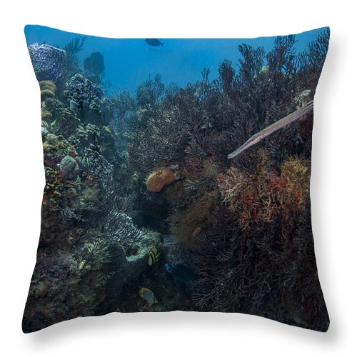 Scene Throw Pillow featuring the photograph Underwater Rain Forest by Sandra Edwards
