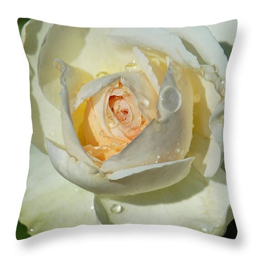 Rose Throw Pillow featuring the photograph Unfolding by Suzanne Gaff