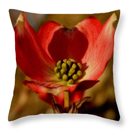 Dogwood Throw Pillow featuring the photograph Unique Dogwood by Karen Harrison