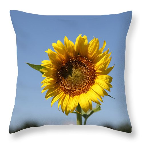 Sunflowers Throw Pillow featuring the photograph United Through Challenge by Amanda Barcon