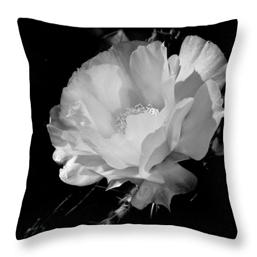 Iphone Throw Pillow featuring the photograph Untitled by Kendall Muyres