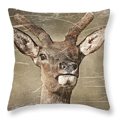 Deer Throw Pillow featuring the photograph Up Close And Personal by Teresa Zieba