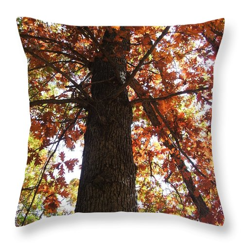 Tree Throw Pillow featuring the photograph Up Fall by Minding My Visions by Adri and Ray