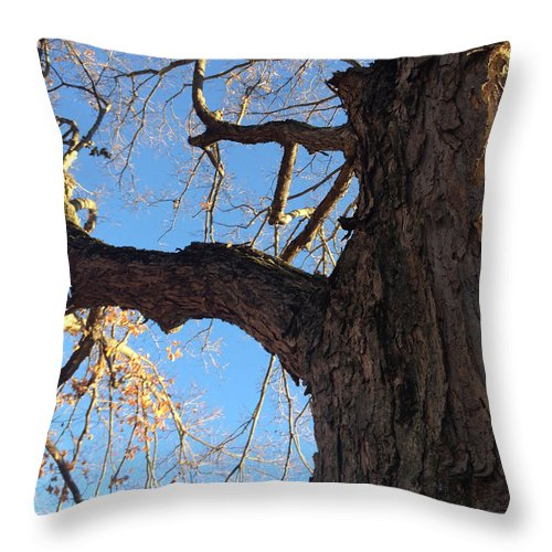 Sky Throw Pillow featuring the photograph Up The Trunk by Paula Talbert