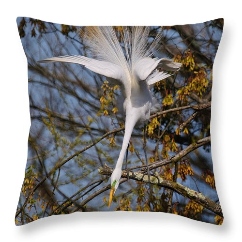Egret Throw Pillow featuring the photograph Upside Down Egret by Timothy Flanigan