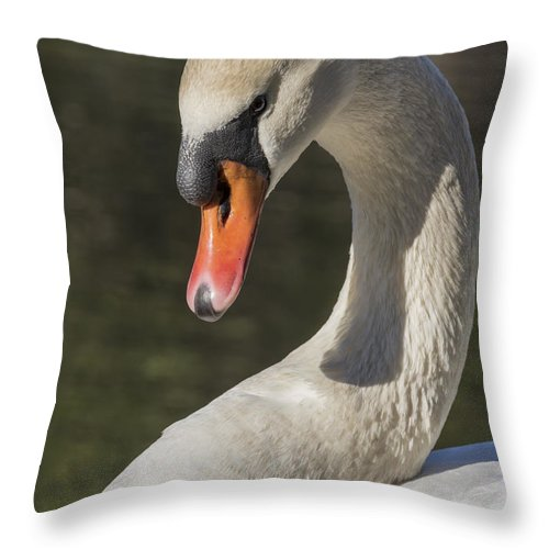Swan Throw Pillow featuring the photograph Vamp by Bruce Frye