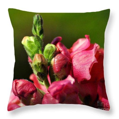 Photography Throw Pillow featuring the photograph Variegated Snapdragon by Kaye Menner