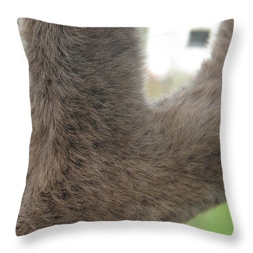 Animal Throw Pillow featuring the photograph Velvet by Lew Davis