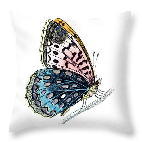 Engraving Throw Pillow featuring the digital art Venus Fritillary Butterfly by Andrew howe