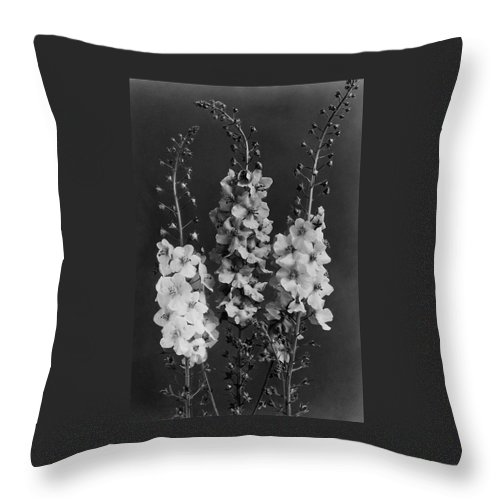 Verbascum Phoeniceum Flowers Throw Pillow