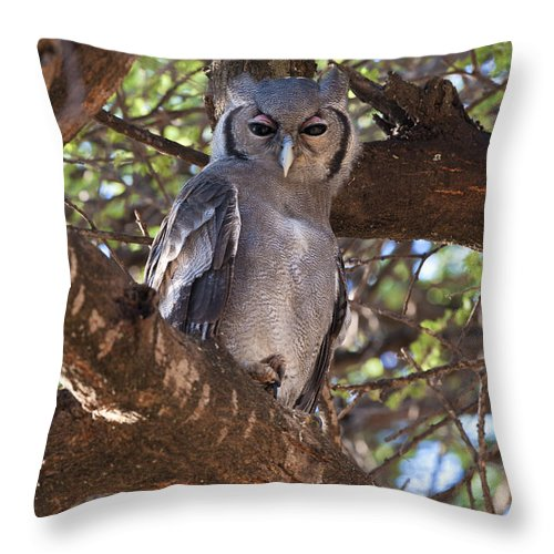 African Fauna Throw Pillow featuring the photograph Verreauxs Eagle Owl In Tree by John Shaw