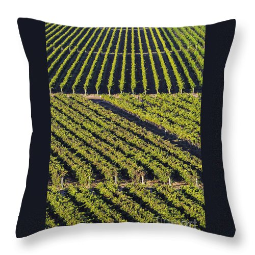Napa Valley California Winery Wineries Grape Vine Vines Tree Trees Road Roads Street Streets Vertical Row Diagonal Rows Vineyard Vineyards Landscape Landscapes Throw Pillow featuring the photograph Vertical And Diagonal by Bob Phillips