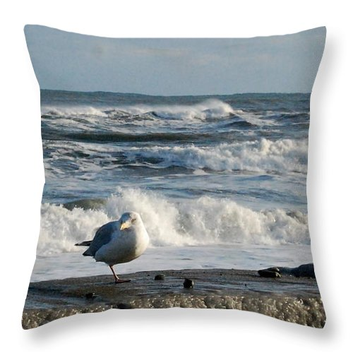 Winter Throw Pillow featuring the photograph Seagull In Winter by Eunice Miller