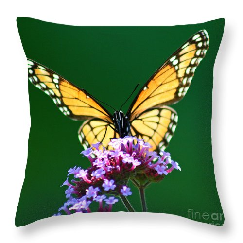 Butterfly Throw Pillow featuring the photograph Viceroy Butterfly Square by Karen Adams