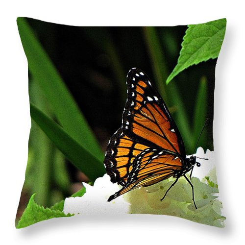 Viceroy Throw Pillow featuring the photograph Viceroy On Hydrangea by MTBobbins Photography