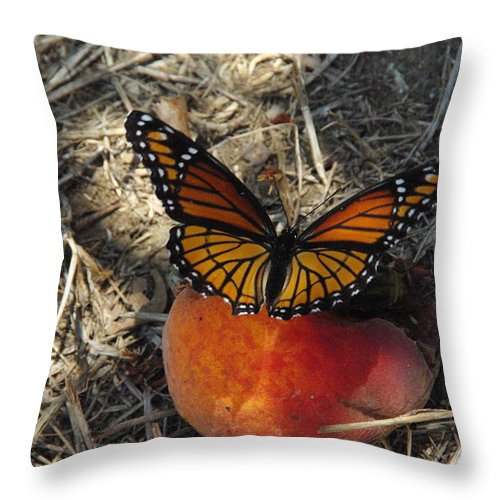 Viceroy Throw Pillow featuring the photograph Viceroy On Peach by Robyn Stacey