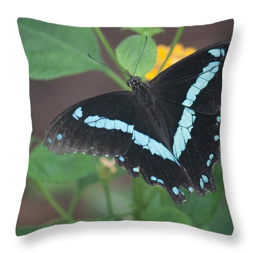 Butterfly. Art Throw Pillow featuring the photograph Victory by Ronald Lake