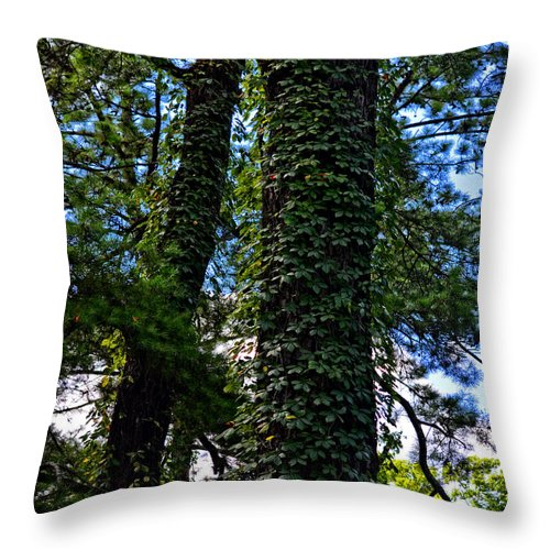 Vines Throw Pillow featuring the photograph Vines In The Swamp by Maggy Marsh