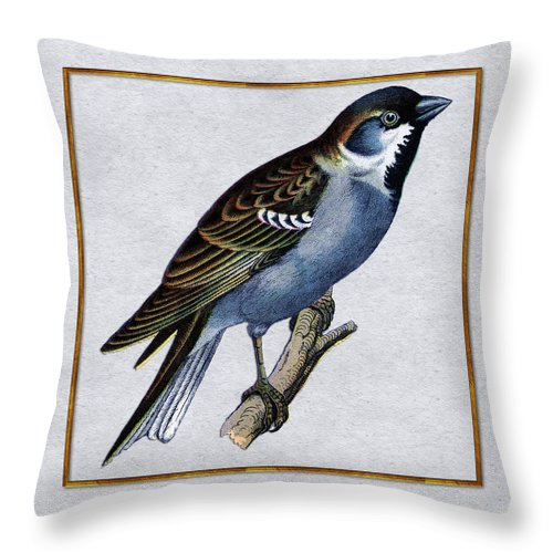 Antique Vintage Traditional Bird Birds Realistic Formal Animal Wild Flying Avian Feathers  Throw Pillow featuring the painting Vintage English Sparrow Square by Elaine Plesser