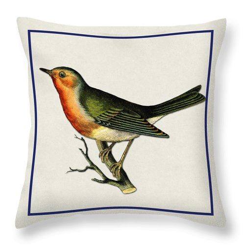 Antique Vintage Traditional Bird Birds Realistic Formal Animal Wild Flying Avian Feathers  Throw Pillow featuring the painting Vintage Robin Square by Elaine Plesser
