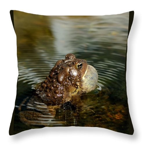 American Toad Throw Pillow featuring the photograph Visible Song by Ian Ashbaugh