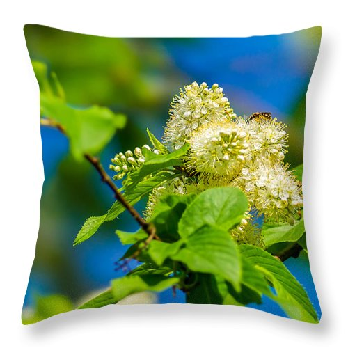 Abstract Throw Pillow featuring the photograph Vision Of Spring - Featured 3 by Alexander Senin