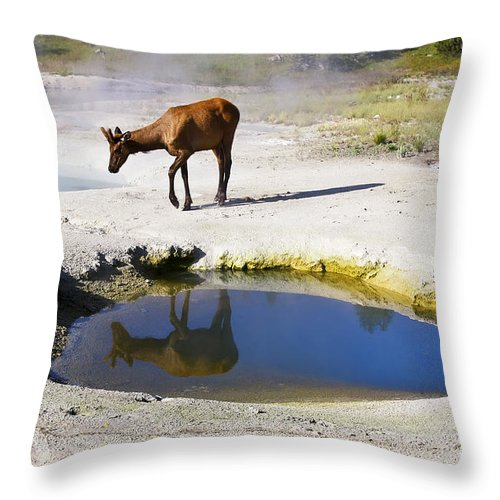 Wildlife Throw Pillow featuring the photograph Visitor At West Thumb Basin by Teresa Zieba