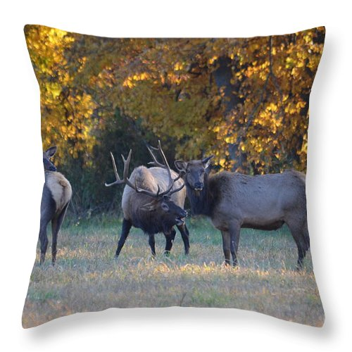 Bull Elk Throw Pillow featuring the photograph Vocalization by Deanna Cagle