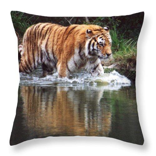 Animal Throw Pillow featuring the photograph Wading Tiger by Glenn Aker