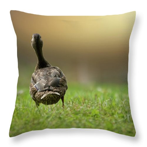 Duck Throw Pillow featuring the photograph Wait For Me by Brent L Ander