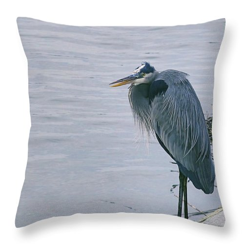 Ardea Herodias Throw Pillow featuring the photograph Waiting For A Boat Ride by Phill Doherty