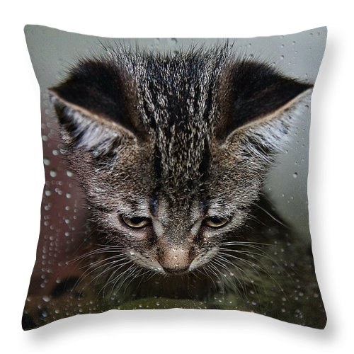 Animal Throw Pillow featuring the photograph Waiting For Sunshine by Teresa Zieba