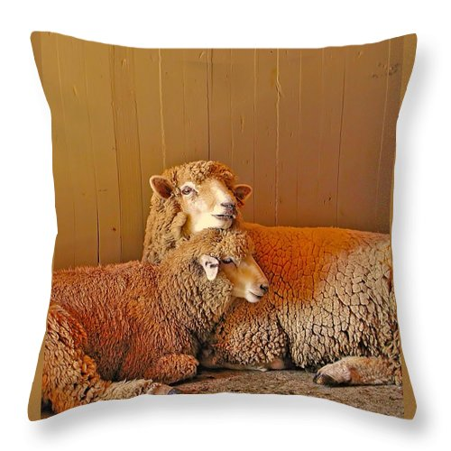 Sheep Throw Pillow featuring the photograph Waiting To Be Fleeced by Marti Snider