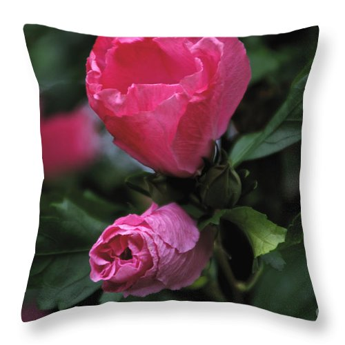 Red Throw Pillow featuring the photograph Wake Up Call by William Norton